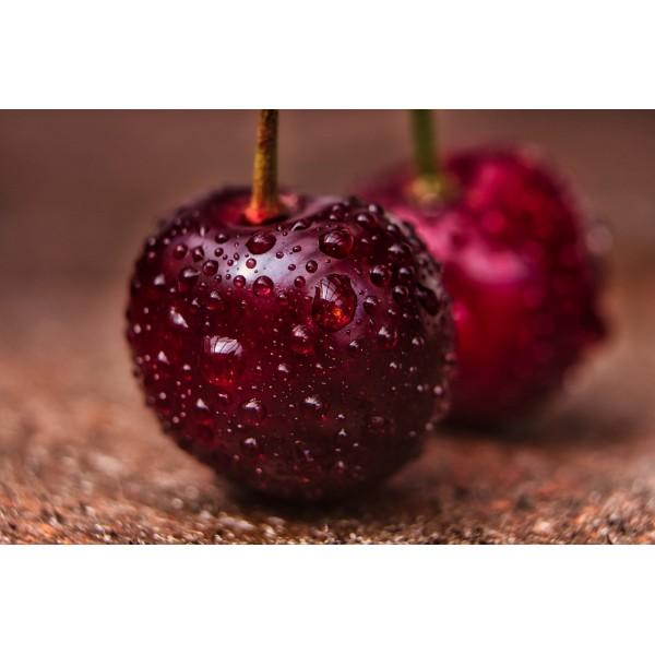 10 Adet Kiraz Fidanı (Cherry) Regina 1. Boy